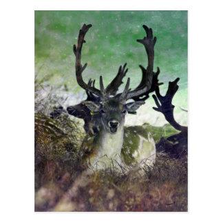 Ridiculously Photogenic Deer Postcard
