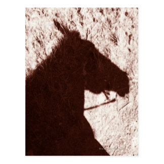 riding horse's head shadow on trail floor Jasper Postcard