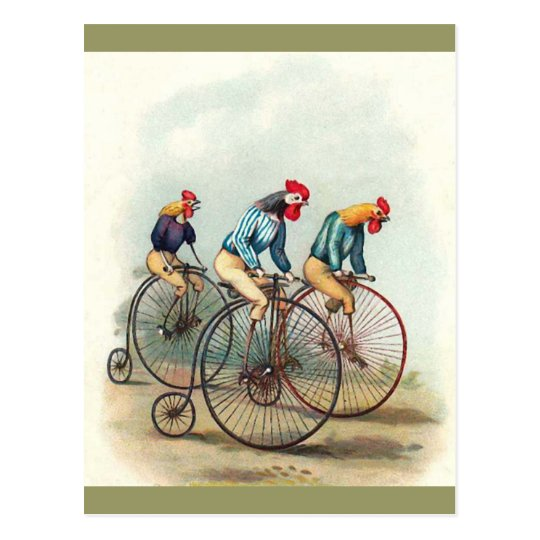 Riding Roosters Postcard