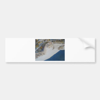 Ridley Sea Turtle Car Bumper Sticker
