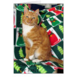 Riley's Christmas Card (Ginger Tabby Cat)