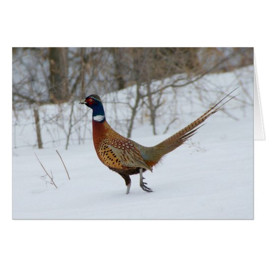 Ring-Neck Pheasant in Snow Holiday Greeting Card