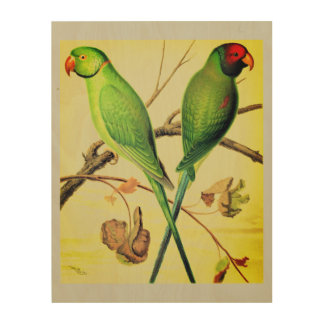 RING-NECKED PARAKEET and PLUM-HEADED PARAKEET Wood Canvases