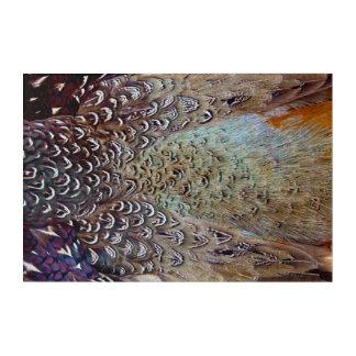 Ring-Necked Pheasant Close Up Acrylic Print