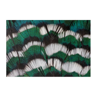 Ring-Necked Pheasant Feathers Acrylic Wall Art