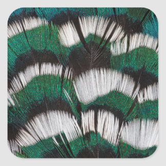 Ring-Necked Pheasant Feathers Square Sticker