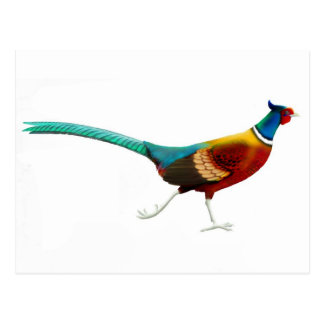 Ring Necked Pheasant Postcard