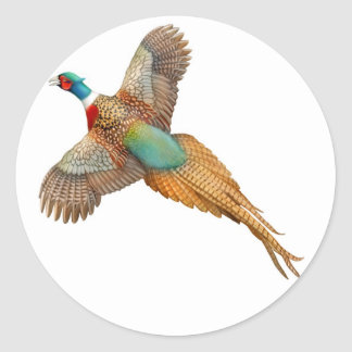 Ring Necked Pheasant Sticker