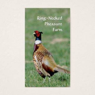 Ring Necked Pheasants photo Business Card