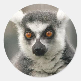 ring tail lemur classic round sticker