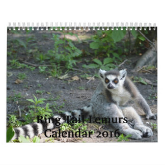 Ring Tail Lemurs 2016 Calendar