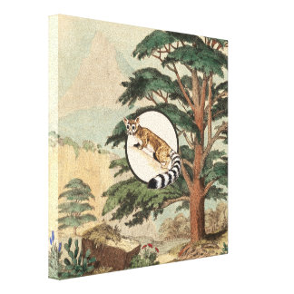 Ring-Tailed Cat In Natural Habitat Illustration Gallery Wrapped Canvas