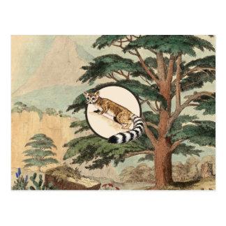 Ring-Tailed Cat In Natural Habitat Illustration Post Card
