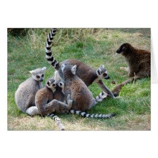 Ring tailed lemur family card