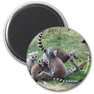 Ring tailed lemur family magnet