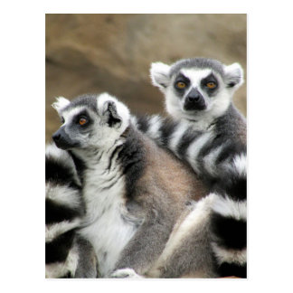 ring-tailed lemur friends postcard
