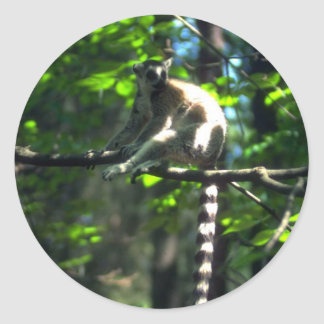 Ring-Tailed Lemur in tree Classic Round Sticker