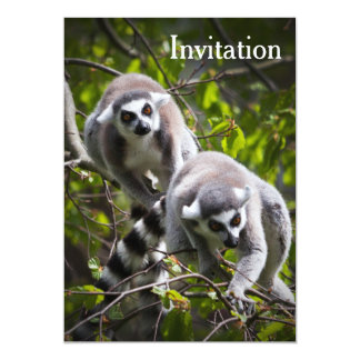 Ring Tailed Lemur Invitation