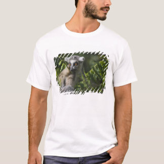 Ring tailed lemur (Lemur catta), Madagascar T-Shirt