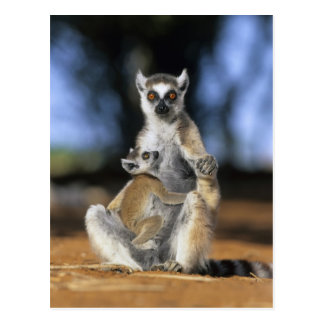 Ring-tailed Lemur, (Lemur catta), Mother and Postcard