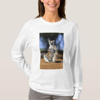 Ring-tailed Lemur, (Lemur catta), Mother and T-Shirt