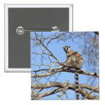 Ring-tailed Lemur (Lemur catta) warming in tree 15 Cm Square Badge