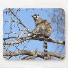 Ring-tailed Lemur (Lemur catta) warming in tree Mouse Mat
