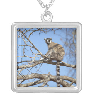 Ring-tailed Lemur Lemur catta warming in tree Necklace