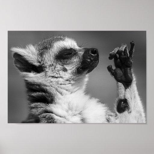Ring Tailed Lemur Playing Poster
