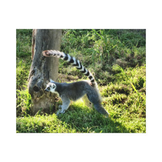 Ring Tailed Lemur Stretched Canvas Print
