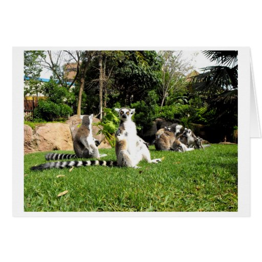 Ring tailed lemurs and their babies card