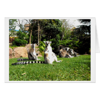 Ring tailed lemurs and their babies greeting card