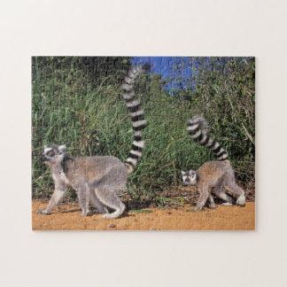 Ring-Tailed Lemurs (Lemur Catta), Berenty Jigsaw Puzzle