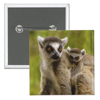 Ring-tailed lemurs (Lemur catta) Mother & baby. 15 Cm Square Badge