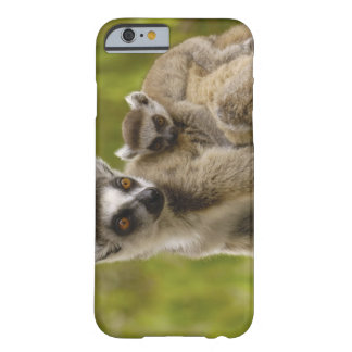 Ring-tailed lemurs (Lemur catta) Mother & baby. Barely There iPhone 6 Case