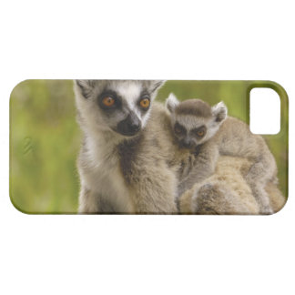 Ring-tailed lemurs (Lemur catta) Mother & baby. Case For The iPhone 5