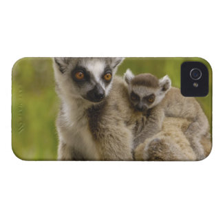 Ring-tailed lemurs (Lemur catta) Mother & baby. iPhone 4 Case