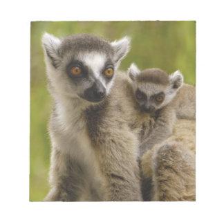 Ring-tailed lemurs (Lemur catta) Mother & baby. Notepad