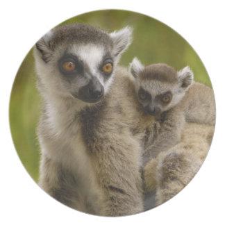 Ring-tailed lemurs (Lemur catta) Mother & baby. Plates