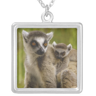 Ring-tailed lemurs (Lemur catta) Mother & baby. Square Pendant Necklace