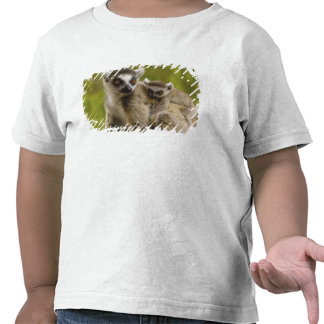 Ring-tailed lemurs (Lemur catta) Mother & baby. Tee Shirts