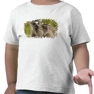 Ring-tailed lemurs (Lemur catta) Mother & baby. Tee Shirts