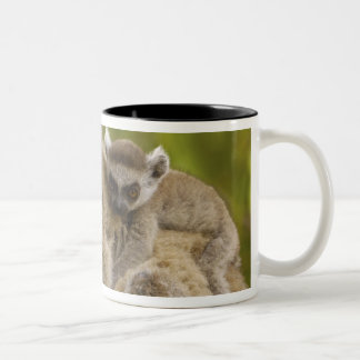 Ring-tailed lemurs (Lemur catta) Mother & baby. Two-Tone Coffee Mug