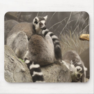 Ring Taled Lemurs Mouse Pad