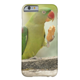 Ringneck Case-Mate Barely There iPhone 6/6s Case