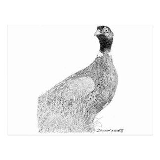 Ringneck Pheasant Postcard