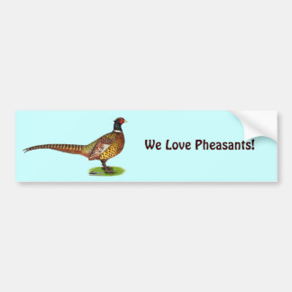 Ringneck Pheasant Rooster Bumper Sticker