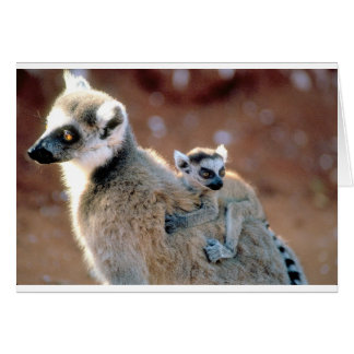 Ringtail Lemur And Baby Greeting Card