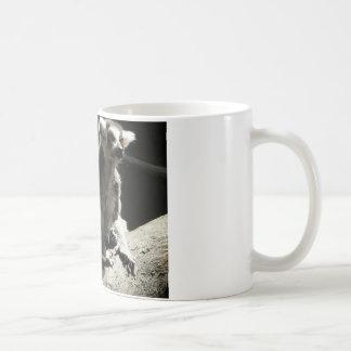 ringtail lemur coffee mugs