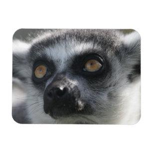 Ringtail Lemur Magnet